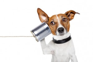 Dog-on-the-phone