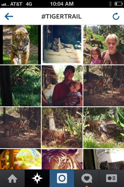 Tiger Trail Social Media Contest
