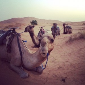 Merzouga-desert-camels